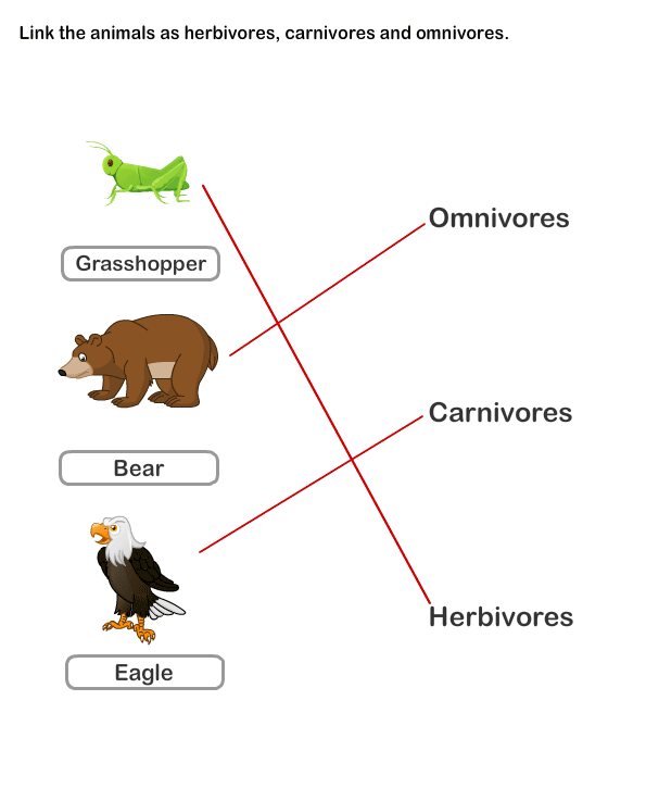 Food chain worksheets year 3