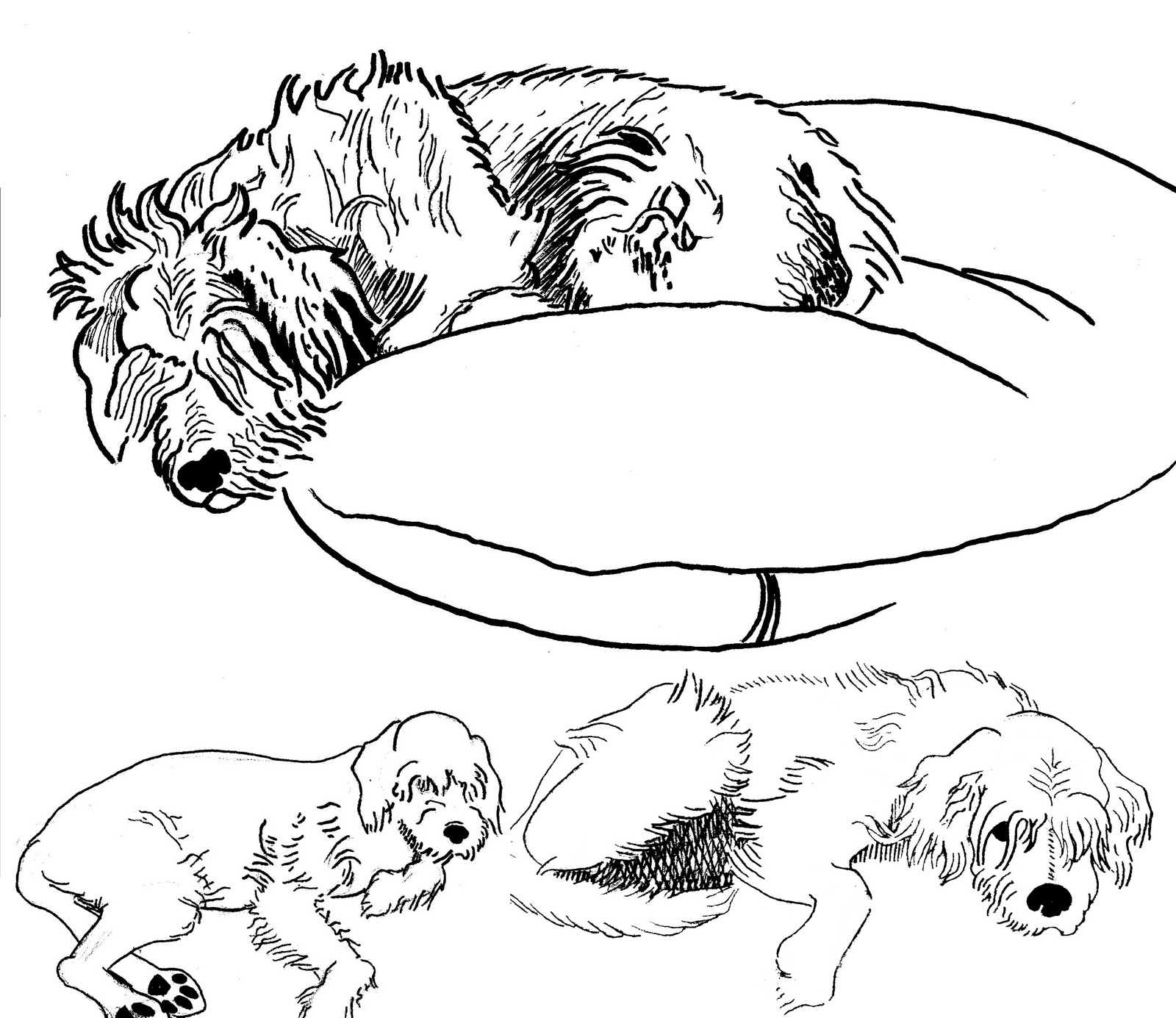 How To Draw A Dog Lying Down Wolf Laying Down Drawing Related Keywords &  Suggestions Wolf