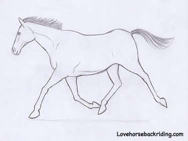 Horses drawings in pencil step by step - photo#30